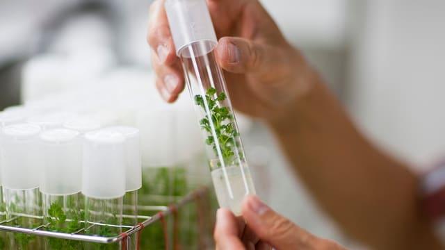 Pflanze in Reagenzglas.