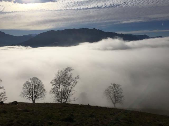 Blick von einem Hügel auf Bäume und darunter liegenden Nebel, in der Höhe dünne Wolkenfelder.