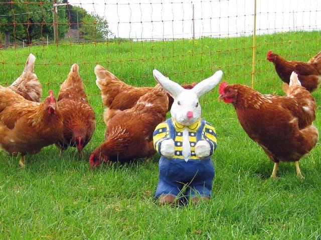 Äusserst maskuliner Osterhase aus Pappmaché steht inmitten von Hennen.