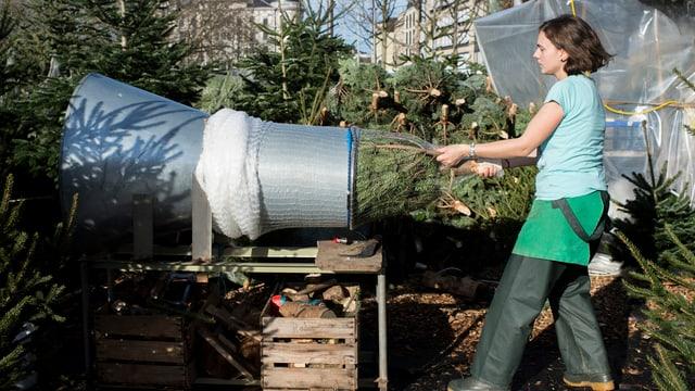 Ein Weihnachtbaum wird «abgetütet»