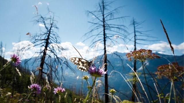 Schmetterling auf einer Blume
