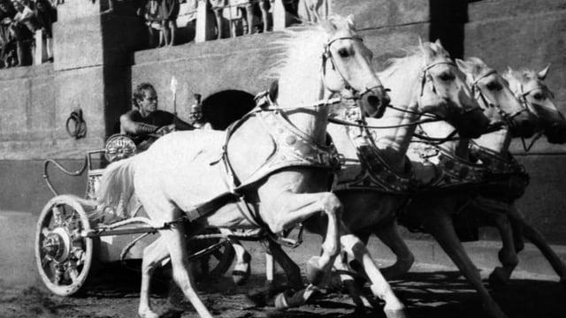 Vier weisse Pferde ziehen einen Wagen in einer Arena.