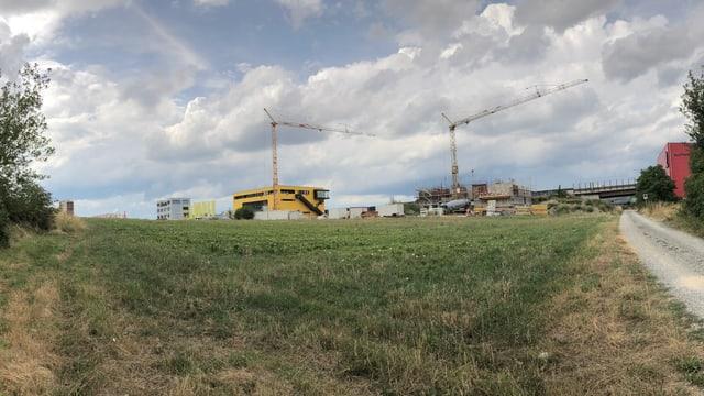 Eine Wiese. Im Hintergrund sieht man Wohnblocks und zwei Krans.