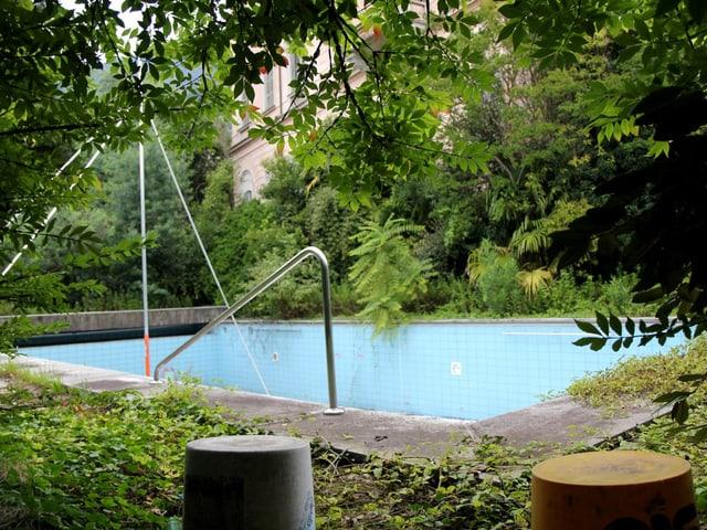Pool umringt von Grünpflanzen.