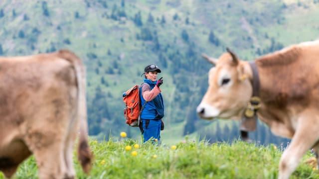 Eine Frau mit Rucksack zwischen zwei Rindern.