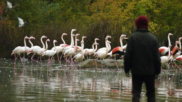 Flamingogehege in Bern