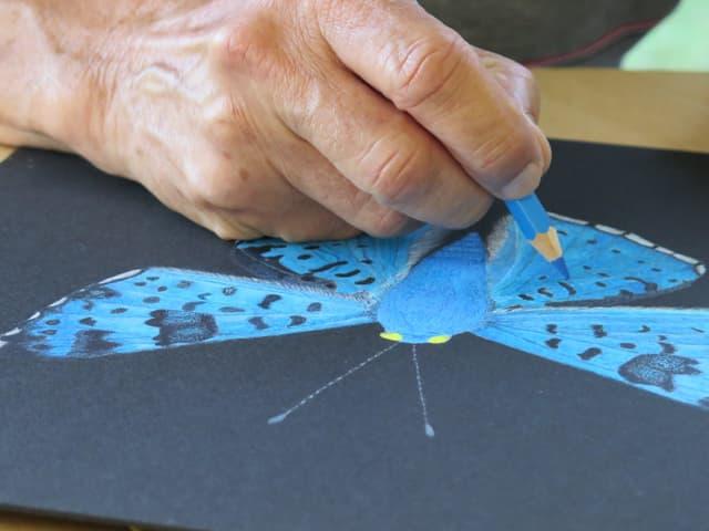 Schmetterlingszeichnung - Detailaufnahme