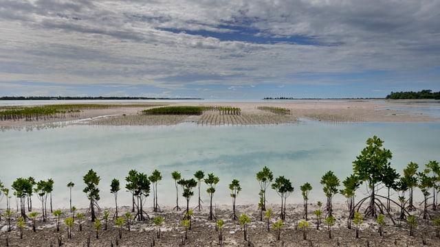 Ein überschwemmtes Gebiet auf dem Inselstaat Kiribati. Vorne sind Mangroven gepflanzt, die vor den Wassermassen schützen sollen.