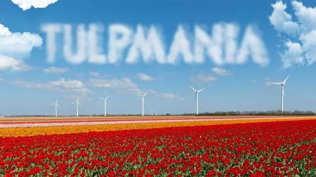 Über einem Tuplpenfeld sind die Wolken zu dem Wort «Tulpmania» formiert.