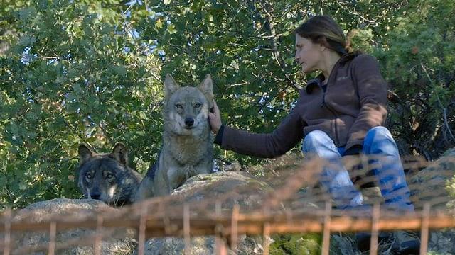 Eine Frau streichelt einen Wolf.