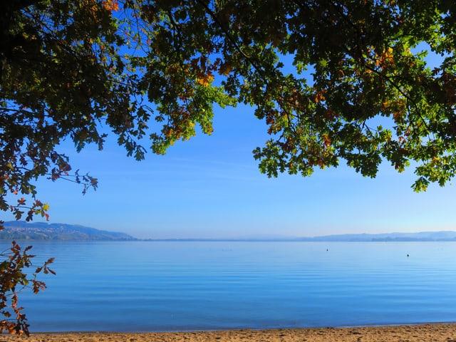 Der Murtensee bei strahlender Oktobersonne, die Laubbäume am Ufer tragen teils noch grün.