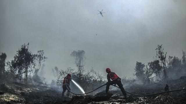 Helfer vor verbrannten Bäumen.
