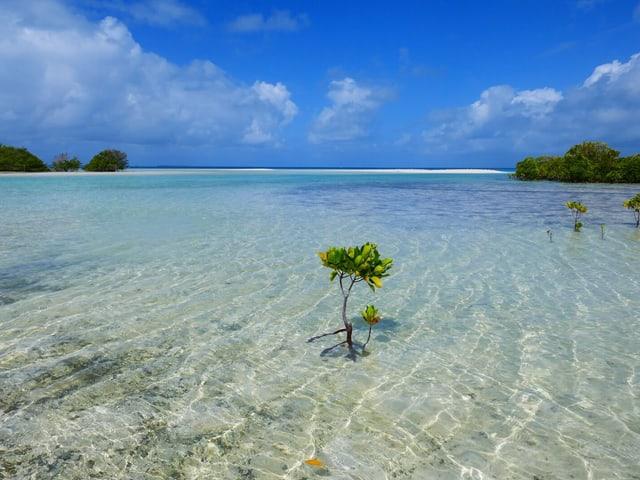 Stimmen die Prognosen der Wissenschaftler, dürfte Kiribati als erste Nation der Welt dem Klimawandel zum Opfer fallen.