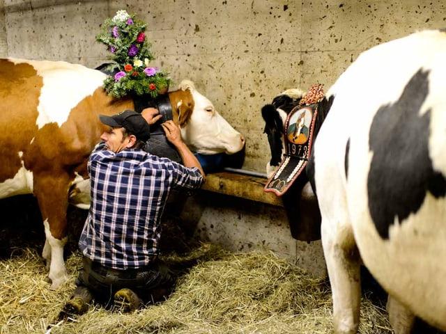 Ein Senn bindet der Kuh einen Kopfschmuck auf.