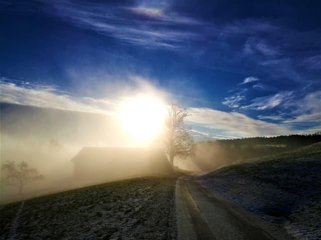Die Sonne taucht aus dem Nebel empor, sie beleuchtet ein Gebäude und einen Baum.