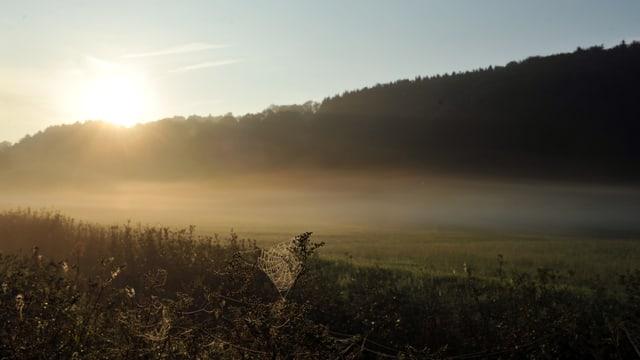 Nebelfeld in der Sonne