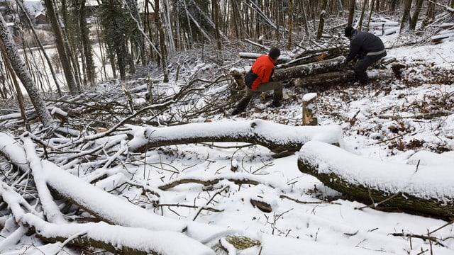 Zwei Waldarbeiter auf einem verschneiten Waldboden am Arbeiten.