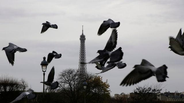 In grisch di per Paris.