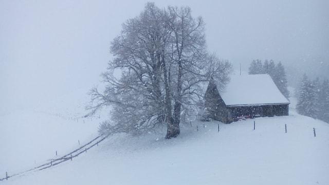 Oberhalb von Gonten herrschte am Sonntagmorgen tiefster Winter!