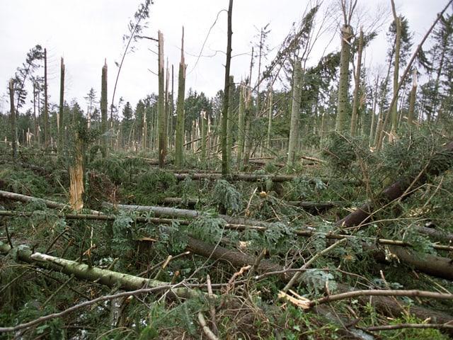 Ein grosses Waldstück wurde durch die Wirkung von Sturm Lothar verwüstet.