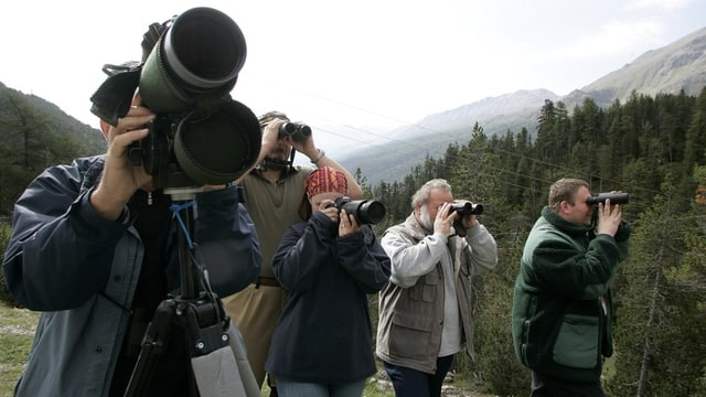 Tschertgar l'urs al Parc Naziunal