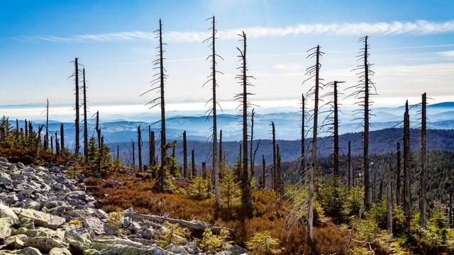 Blick auf abgestorbene Bäume