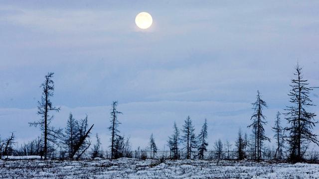 Russische Tundralandschaft im Winter.