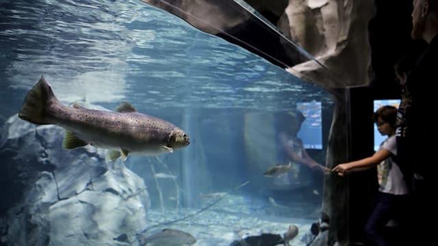 In uffant observa in pesch en laquari.