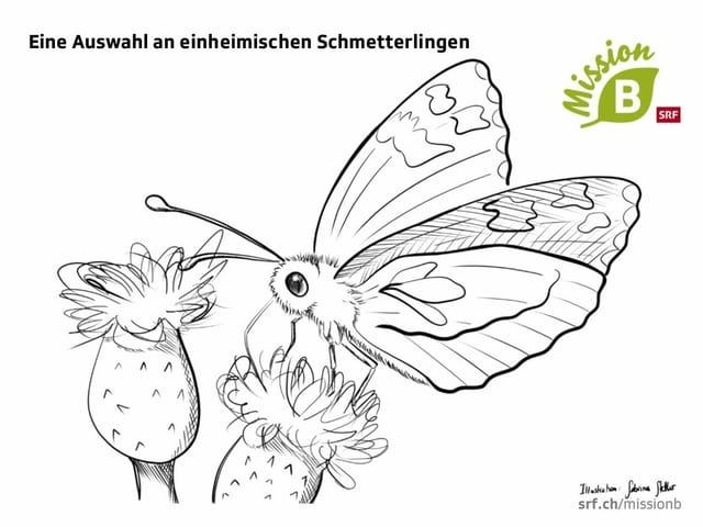 Schmetterlingsillustration zum Ausmalen