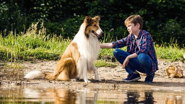 Ein Langhaarcollie und ein Junge sitzen an einem Gewässer. Im Hintergrund Wald. Der Junge streichelt den Hund.