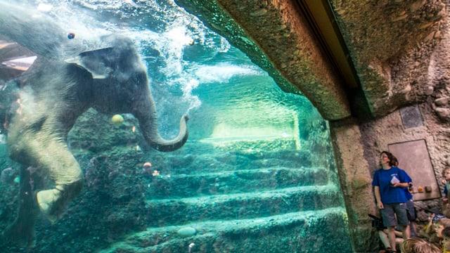 Durch ein Fenster sieht man in ein Wasserbecken, in dem ein Elefant schwimmt.
