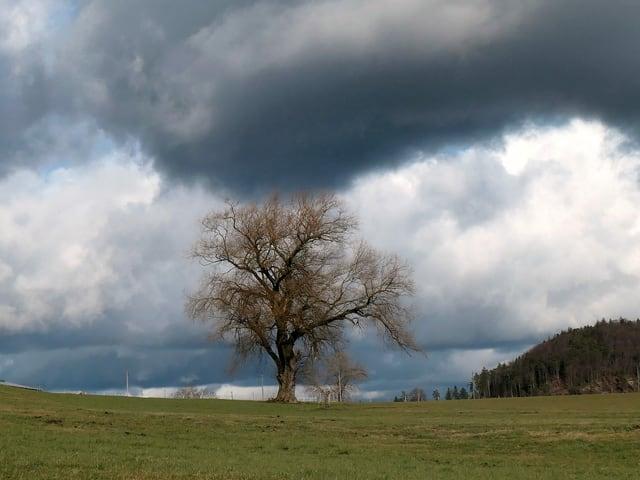 Ein Baum unter dunklen Wolken
