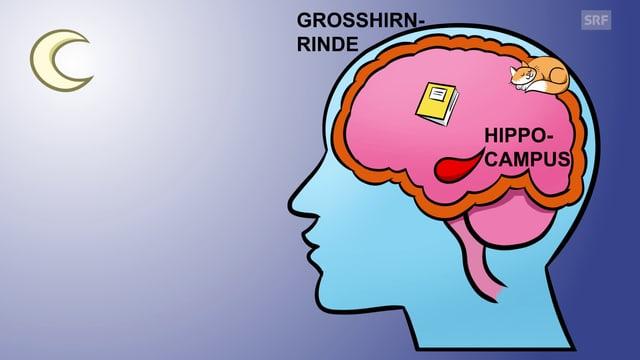 Eine Zeichnung eines Gehirns.
