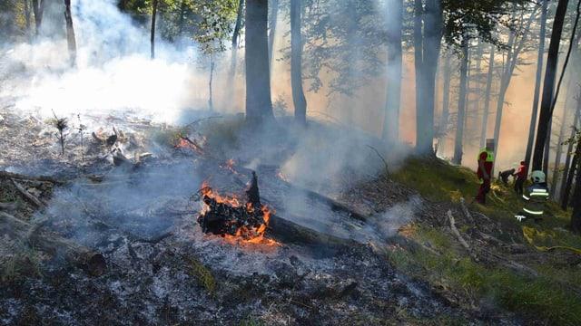 Brennender Baum, daneben verbrannte Erde und viel Rauch zwischen Bäumen