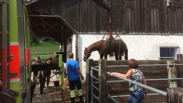 Ein Pferd muss aus einer Jauchengrube gehoben werden.