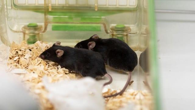 Verbot von Tierversuchen - Neue Initiative will Tierversuche komplett verbieten
