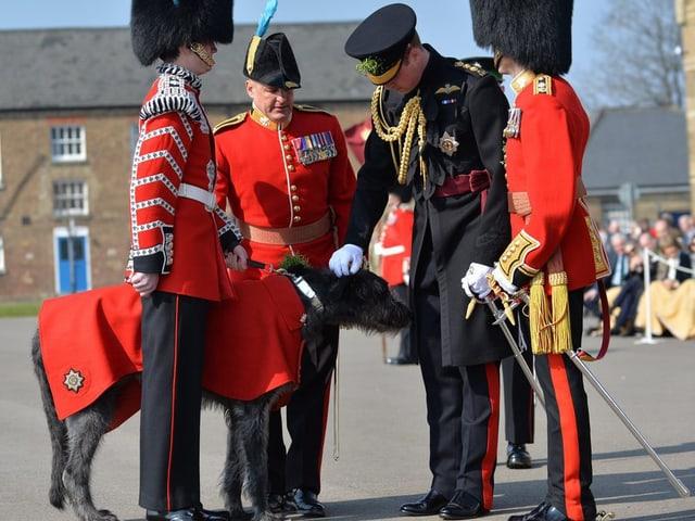 Prinz William bückt sich, um einen grossen, schwarzen Hund zu streicheln.