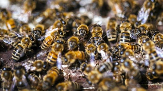 Dutzende Bienen.