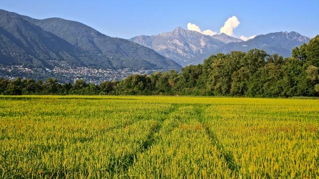 Blick vom Maggiadelta Richtung Locarno-Monti.