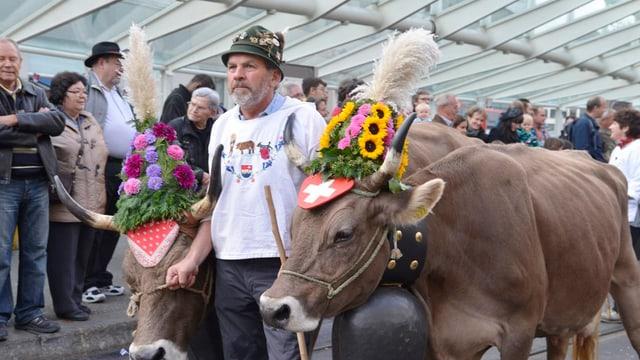 Ein Bauer mit seinen geschmückten Kühen.