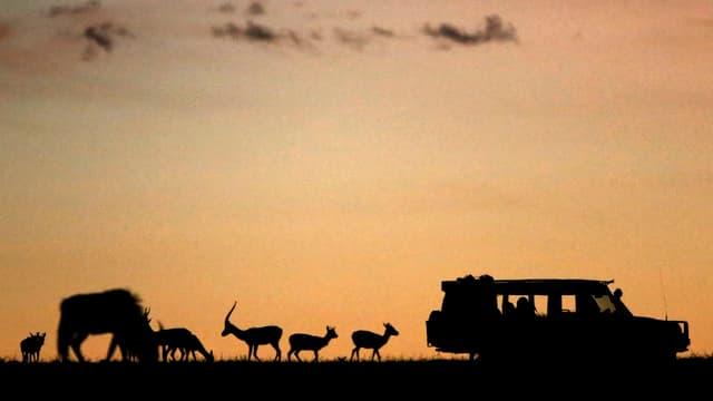 Die Kulisse eines Autos und mehrerer Tiere in Afrika.