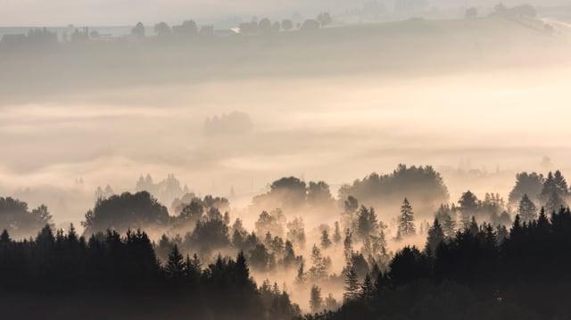 Vom Raten gab es am 5. September einen schönen Blick auf Morgennebelfelder.