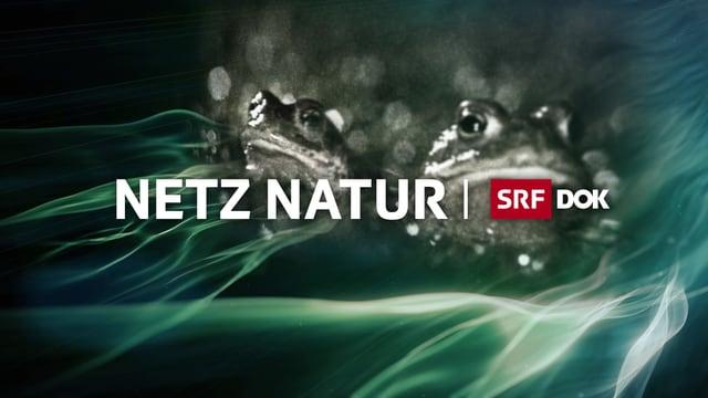 Sendungs-Logo «Netz Natur»