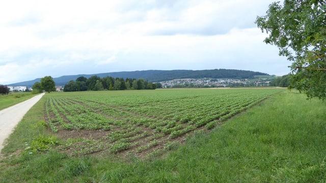 Eine Ackerfläche bei Regensdorf, auf der fruchtbarer Boden verwendet wird.