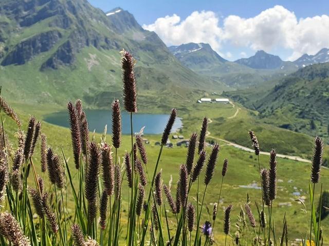Blick zwischen Grashalmen hindurch auf eine Alp mit Bergsee.