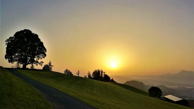 Sonnenaufgang am Holderchäppeli. Krete mit einem Baum, daneben die Sonne im Saharastaub.