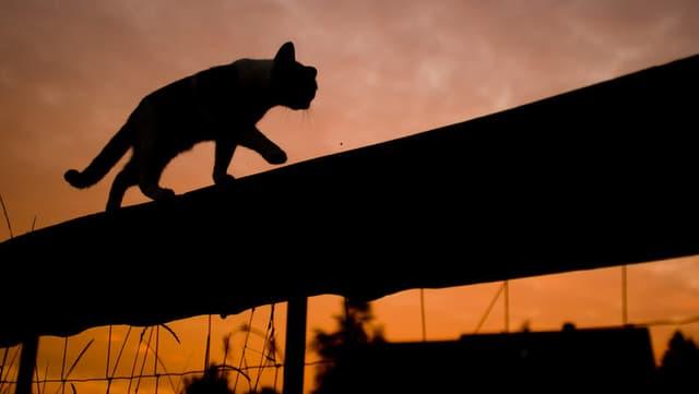 Katze auf Zaun.