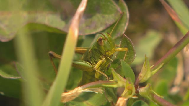 Video «Sind unsere Insekten noch zu retten?» abspielen