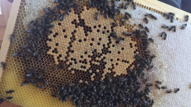 Bienenwabe in Holzrahmen mit Bienen drauf.