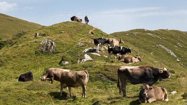 Wanderer passieren eine Kuhweide.